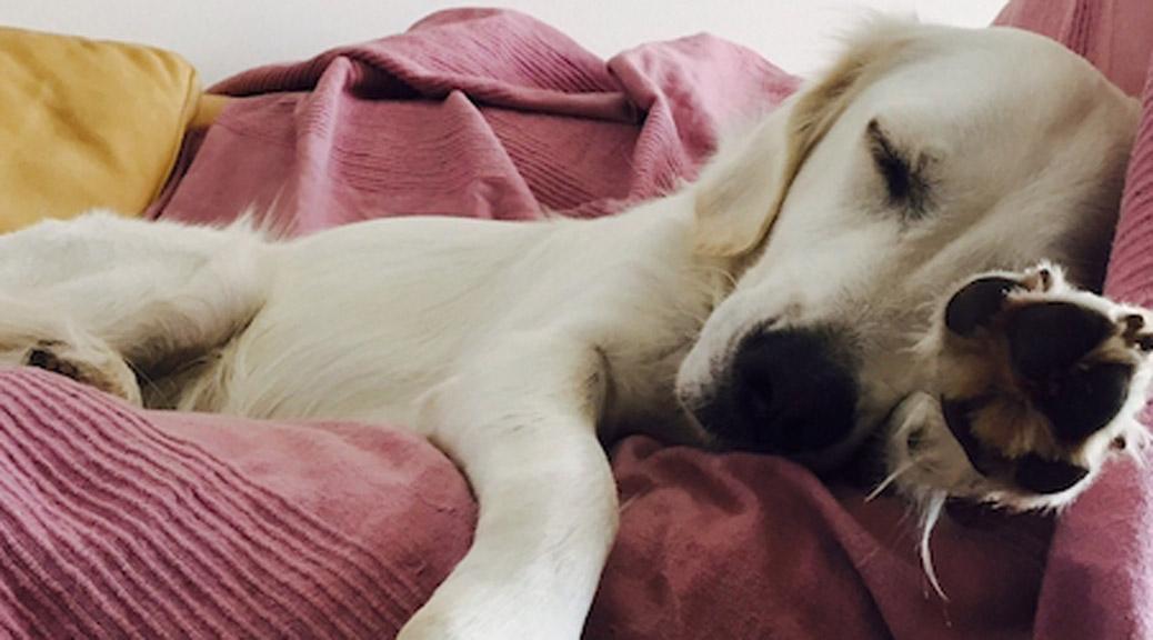 Mein Hund und Instagram