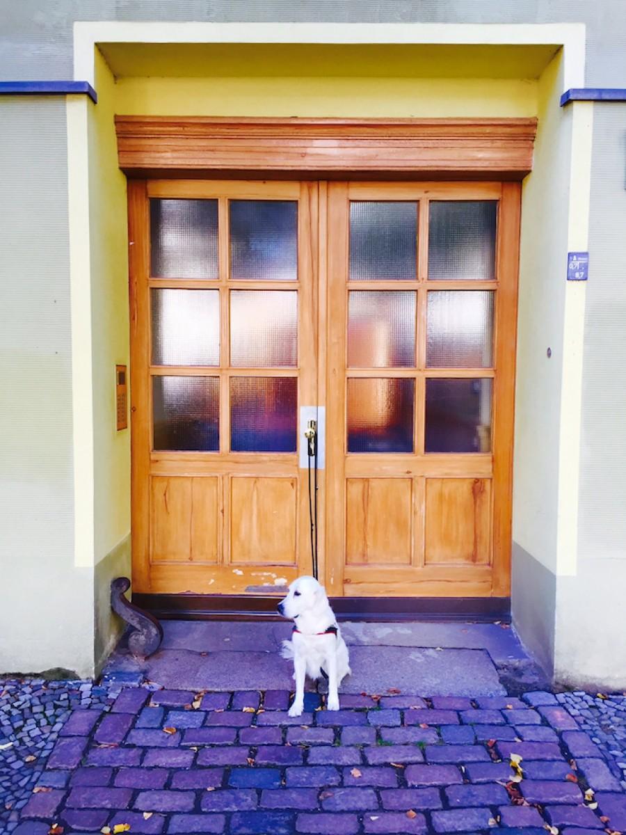 Ella wartet auf ihr nächstes Abenteuer (Bild: Marc Mühleis)