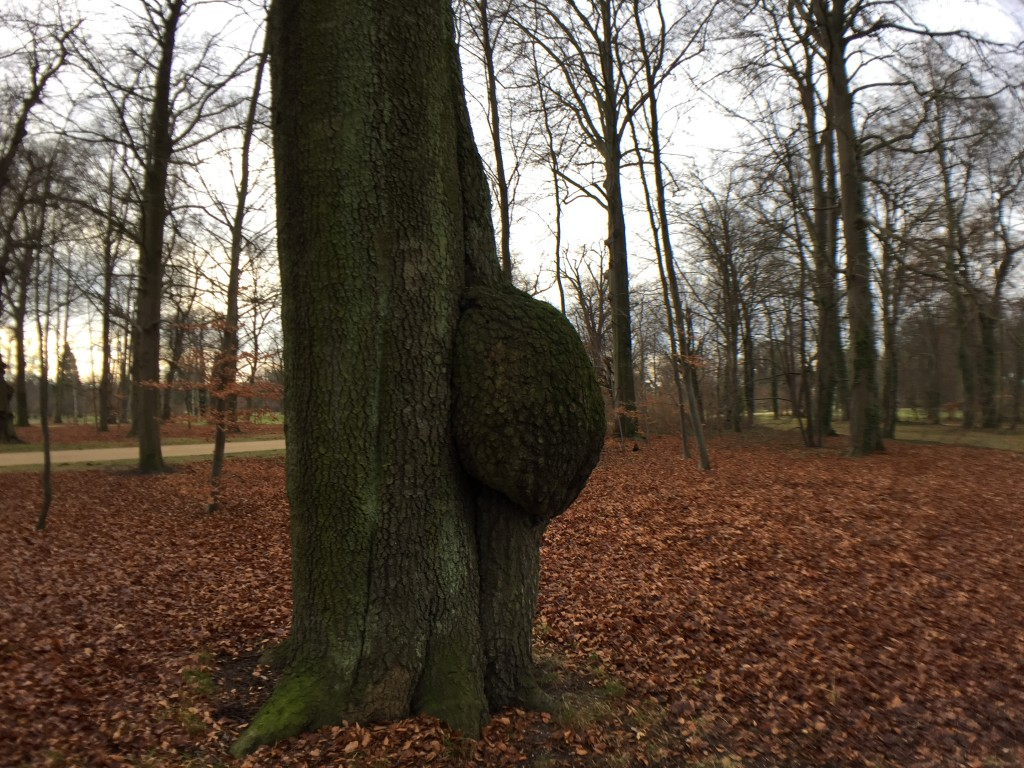 A tree pregnant in the 7 th